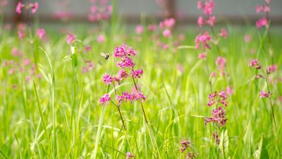 *** цветы розовые макро полотно
