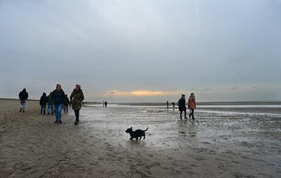 Пейзаж с собачкой на переднем плане