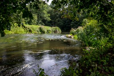 Прохлада реки