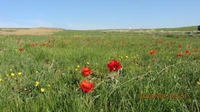 Плато горы во время цветения тюльпанов*** Горы