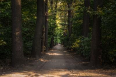 """Аллея в """"изумрудном лесу"""". пейзаж лето аллея деревья вечер зелень свет цвет"""
