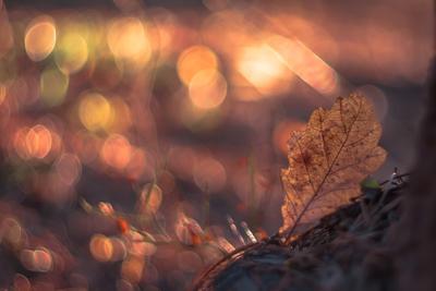 Дубовый весна боке листья