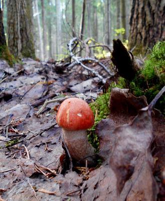 любопытство лес грибы