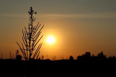 выше солнца контраст солнце