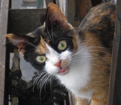 Зверюка кошка