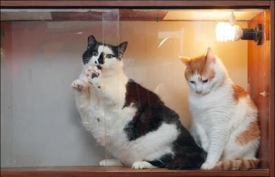 Узники коты Тёма Макс полка плен неволя заключение заточение