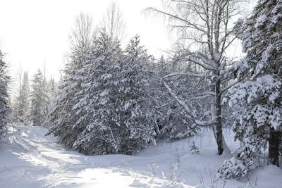 просто зима... зима природа лес мороз прогулка снег солнце тени ели