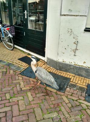 Птичка посреди города