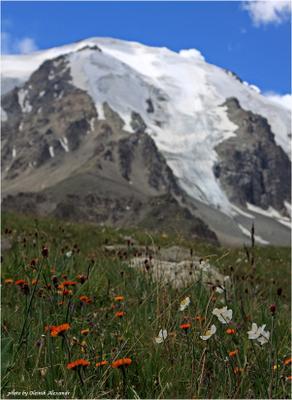цветы гор