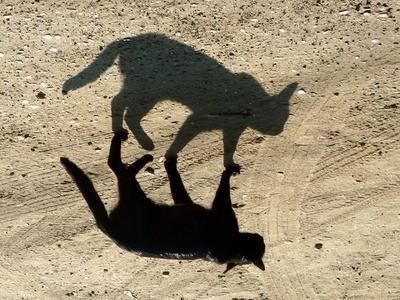 Я и мая тень чёрный кот, тень