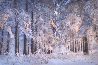 Сердце зимы