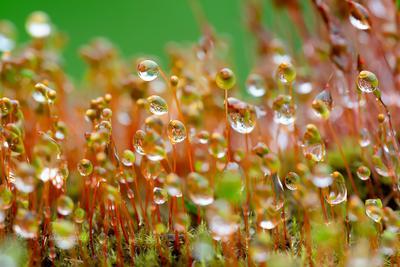 Мох в каплях мох макро природа капли воды