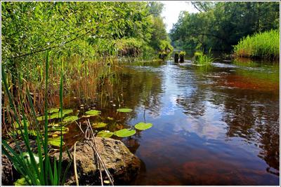 *** fitter36 речка лето пейзаж