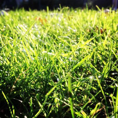 И снится нам трава... трава