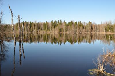 Озерцо Озеро, Новгородская обл., тишина, вечер