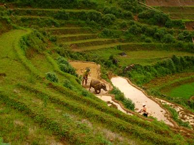 Северный Вьетнам.Чеки.