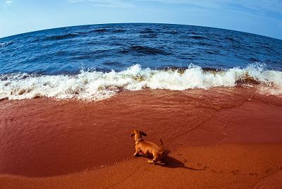 pepsi cola карелия, ладога, озеро, берег, пляж, горизонт, пейзаж, вода, небо, собака, pepsi, cola, рыбий глаз