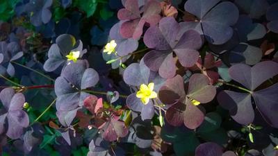 комплиментарные цвета в природе