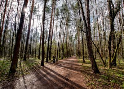 Еще прозрачный лес... Москва лесопарк Лосиный остров