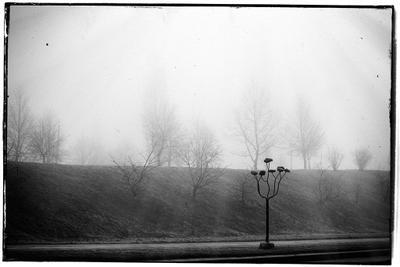 Trees in the mist tuman mist fog trees