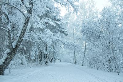 белым по белому рисует зима) зима природа березовая роща вечер мороз прогулка иней сибирь