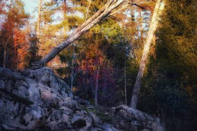 Карелия, октябрь осень лес