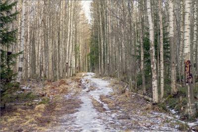 Изменчивая погода Карелия лес тропа