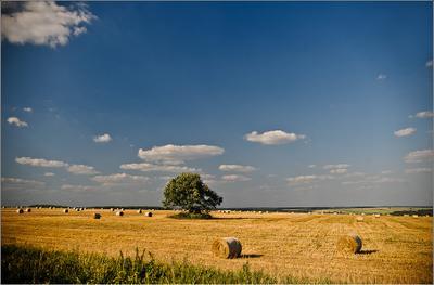 katushki поля сено катушки
