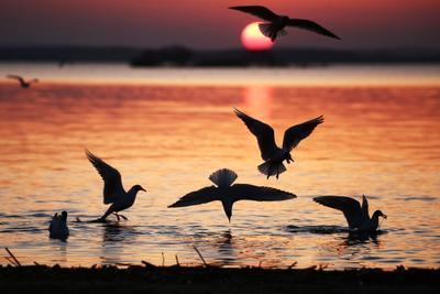 Охота природа весна чайки птицы закат озеро
