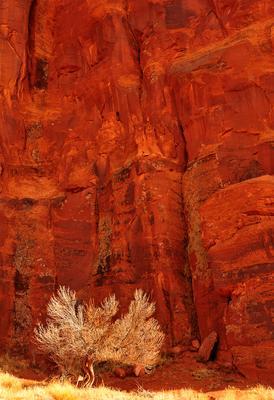 Дерево дерево камень песчаник аризона