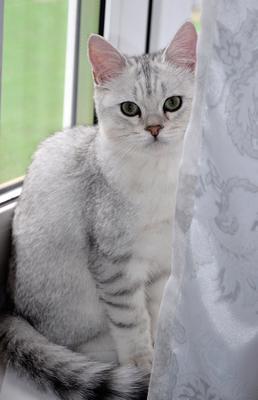 Степашка №7 коты