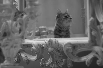 Буся кот, зеркало