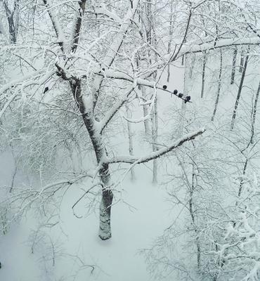 *** Зима снег