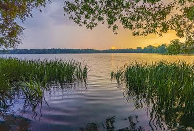 За мгновения до ливня озеро закат ливень тучи вечер трава ивы