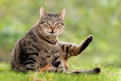 Ну и что надо? лето кошка полосатая дикий взгляд