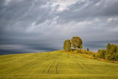 Деревья лето деревья поле небо пейзаж природа облака Лысьва
