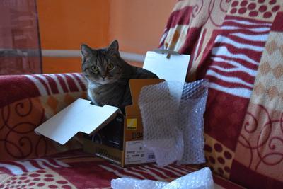 ***Кошечка и Никон кошки животные фото природа дом коты
