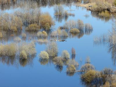 Половодье потоп вода деревья пейзаж природа красота необычно оригинально голубой река озеро весна половодье стихия