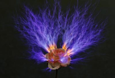 Аленький цветочек Роза цветок молнии искры интерьерное фото ночная съемка