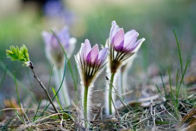 Сон сон сон-трава волшебство весна