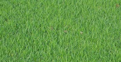 Просто трава Природы трава