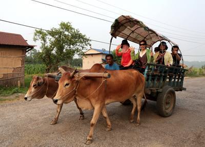 Вечерние покатушки Непал Саураха девушки коровы прогулка