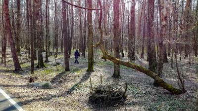 Лесной олень в апреле... Москва лесопарк Лосиный остров апрель