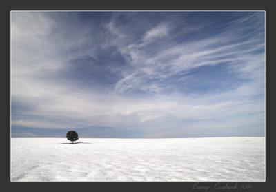 О ней, о  единственной... Небо, поле , снег, сосна.