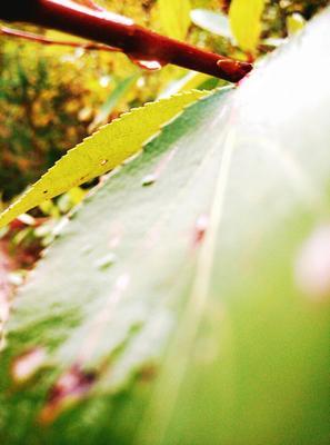 Лист в близи Лес дерево ветка лист