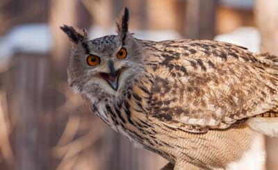 Owl's portrait сова птица портрет животные эмоции