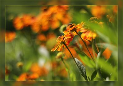 * цветы лето