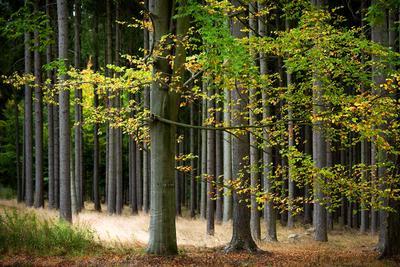 """Осень в """"Черном"""" лесу лес, осень, дерево"""