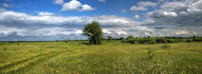 Середина лета солнце, облака, травы, луг, поле
