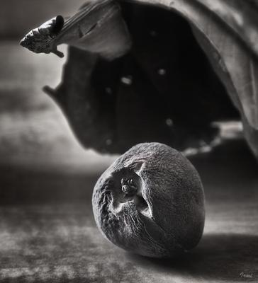 *** состарившийся персик сухой лист
